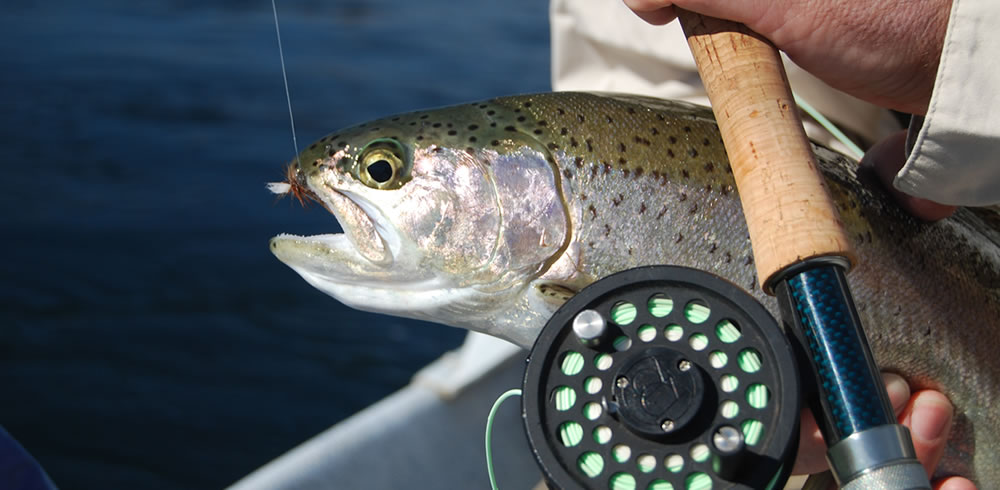 nothing better that cast to a rising fish and land it on a dry fly