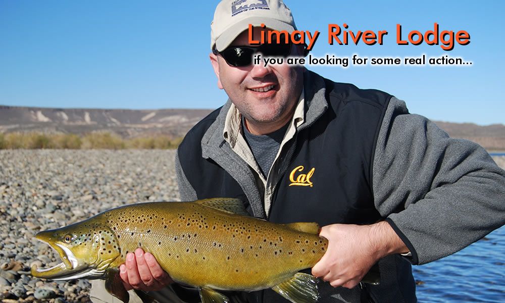 monster brown trout - middle limay river photo
